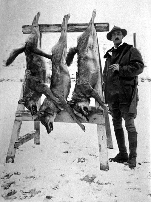 Carlo Paolucci e i tre lupi catturati con la stricnina nel novembre del 1924
